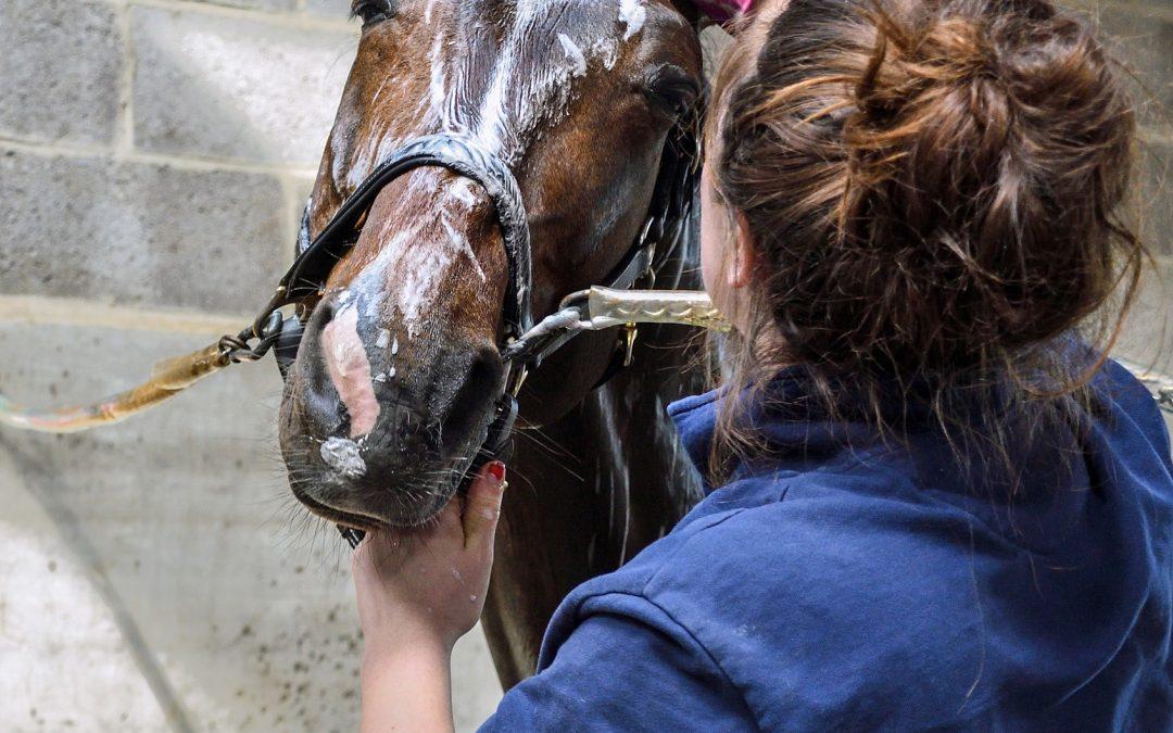 In de wintermaanden je paard wassen, maar je hebt geen wasplaats met warm water?